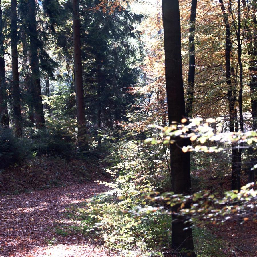 Trauerreden in Kreuztal, Hilchenbach