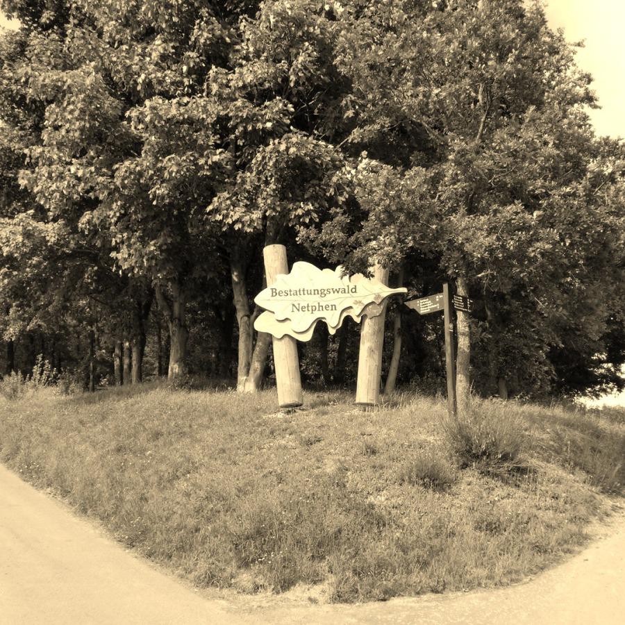 Friedhofswald Netphen